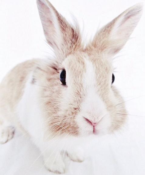 Bunny - Stijlmeisje