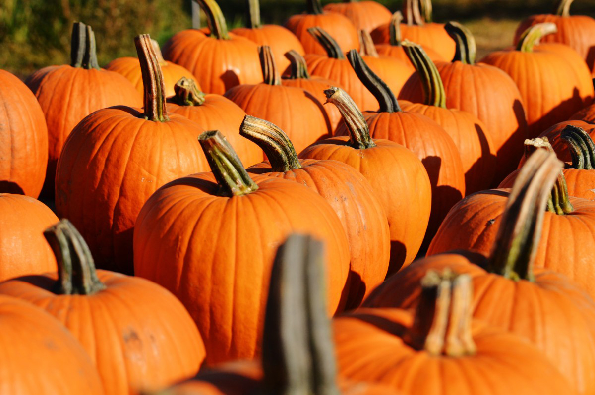 Halloween - Stijlmeisje