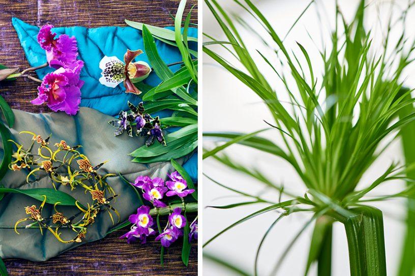 Trend gespot: de plant als muze - Stijlmeisje